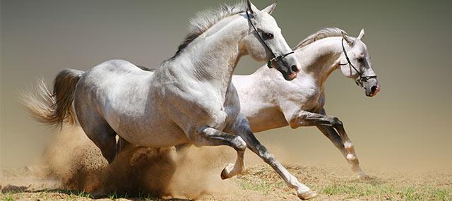 EquineInsuranceTips